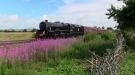 45407 Stoke Canon 7.7.2014